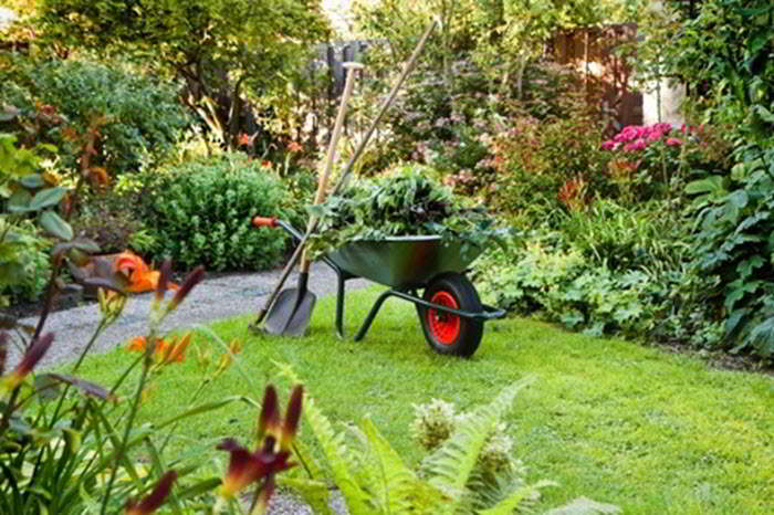 wheelbarrow with yard waste, shovel and rake