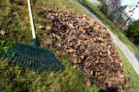rake beside dry leaves on grass